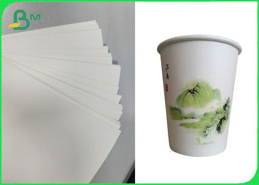 China PE Coated Cupstock Based Paper Roll & Sheet 170GSM - 210GSM Degradable Material supplier