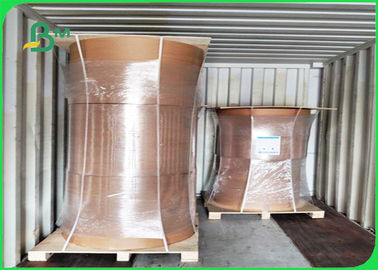 China Offset Printing PE Coated Paper 300 + 15g FDA Disposable 750 / 800 / 900mm supplier